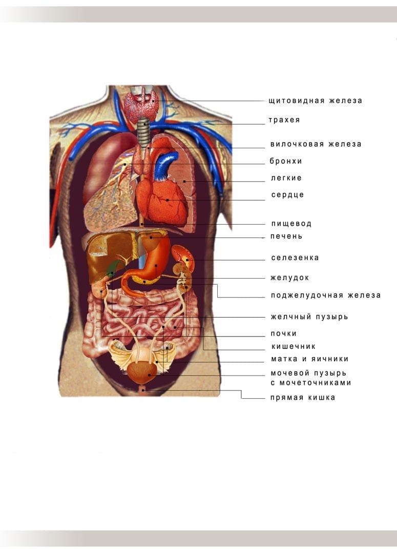 инструкция наложения эластичный бинт при тромбозе