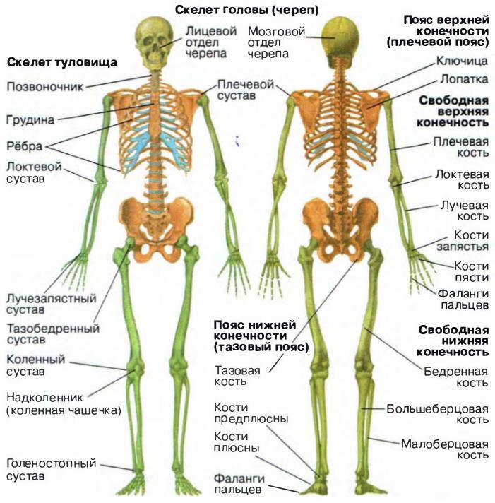 При ранениях в тазобедренного сустава используют шину кровь в коленном суставе причины и лечение